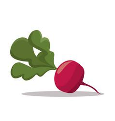 radish nutrition healthy image vector image