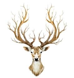 Watercolor hand drawn deer vector image