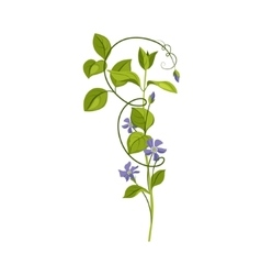Bindweed Wild Flower Hand Drawn Detailed vector image