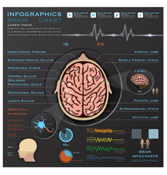 Brain And Nervous System Medical Infographic vector image