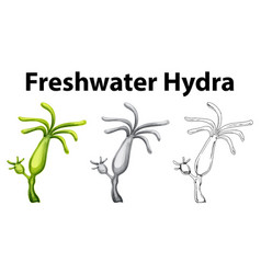Doodle drawing for freshwater hydra vector