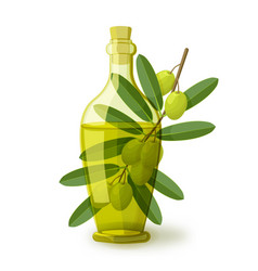 olive branch with bottle oil vector image