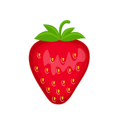 strawberry isolated on whit vector image