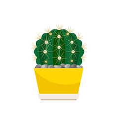 cactus house plant in yellow pot vector image