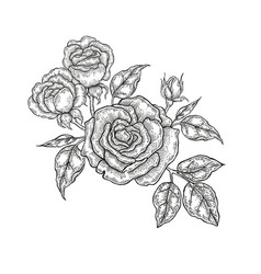 hand drawn flowers vintage floral composition vector image vector image