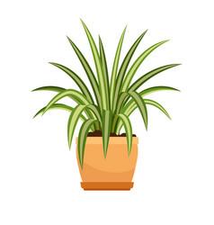 chlorophytum house plant in flower pot vector image vector image