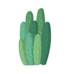 cactus and succulent colorful cartoon vector image