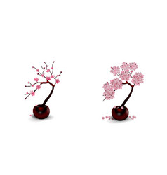 sakura ikebana composition two drawings of vector image