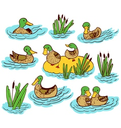set with ducks and reed on water vector image