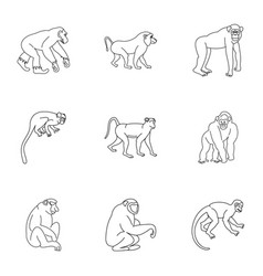 Species of monkey icon set outline style vector