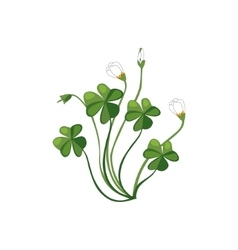 Shamrock Wild Flower Hand Drawn Detailed vector image