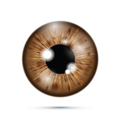 Brown realistic eyeball on a cell mobile phone vector