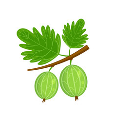 Green gooseberry brunch vector