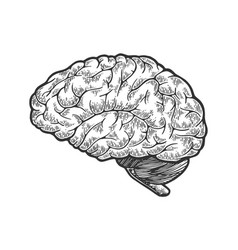 human brain sketch engraving vector image