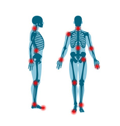 Human skeleton front and side view men anatomy vector