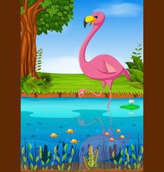 crane bird in the river vector image