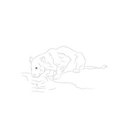 A lioness who drinks water lines vector