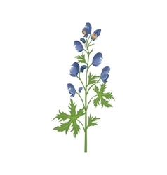 Aconite Wild Flower Hand Drawn Detailed vector image