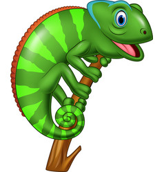 cartoon chameleon on a branch vector image