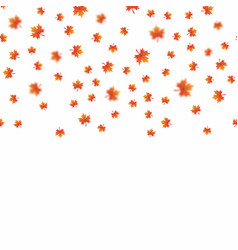 falling maple leaves on white background vector image
