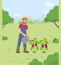 Farming man watering aubergines at farm vector