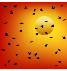Flock of birds at sunset vector