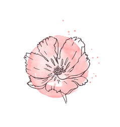 Hand drawn poppy isolated vector