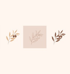 Set modern abstract aesthetic olive branch vector