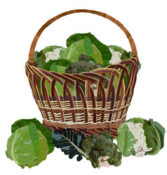 Wicker basket full fresh cabbage vector