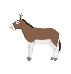 Donkey realistic white vector