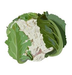 Fresh raw cauliflower flat isolated vector