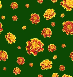 Marigold background vector