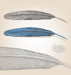 Feather in engraving style vector image vector image