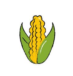 Delicious and healthy cob corn food vector