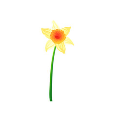 Beautiful daffodil with yellow petals colorful vector