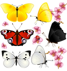 Butterflies set with orchids small vector image vector image