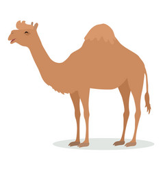 Dromedary camel cartoon icon in flat design vector