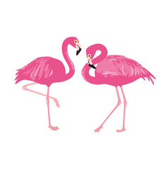isolated pink flamingos pair hand drawn vector image