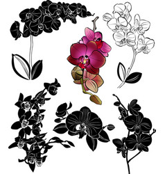 set orchids flowers it is isolated vector image