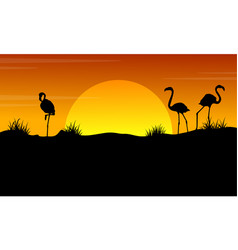 at sunset with flamingo silhouette landscape vector image