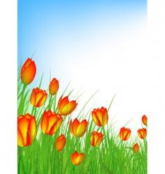 tulip field vector image vector image