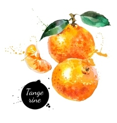 Hand drawn watercolor painting tangerine on white vector