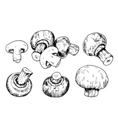 mushroom collection with champignons in engraving vector image