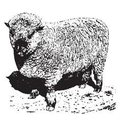 Shropshire ram vintage vector