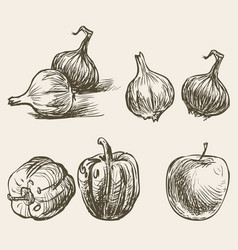 Sketches sweet pepper onion and apple vector