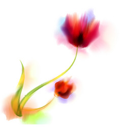 watercolor romantic blooming poppy flowers vector image