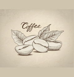 Coffee beans with leaves and handwritten vector