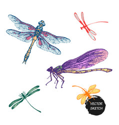 Dragonfly sketch set design vector