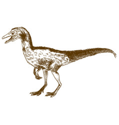 engraving of compsognathus longipes vector image