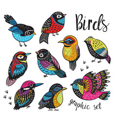 Graphic set with hand drawn exotic birds vector